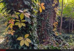 گزارش اختصاصی ایلنا از پاییز در باغ بوتانیکال تفلیس