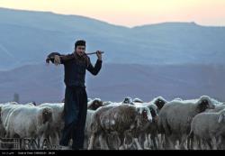 زندگی عشایر ایل قلخانی در شهرستان قصرشیرین