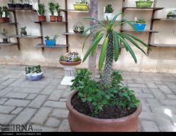 نمایشگاه گیاهان خانواده کاکتوس/عکس:النازملکی