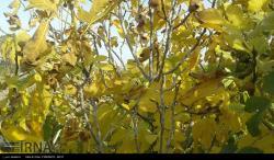 پاییز خیال انگیز در دامغان/عکس:میثم اسماعیلی